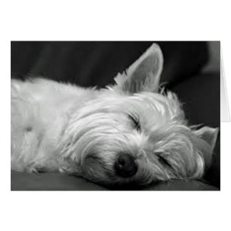 Westie Asleep Card