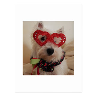 Westie Heart of Love Postcard