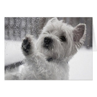 Westie in the Rain Greeting Card