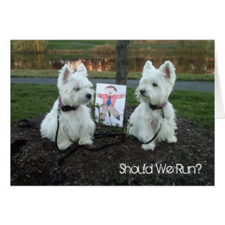 """Westie Just for Fun Card """"Should We Run?"""""""