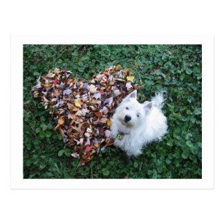 Westie Leaves of Love Postcard