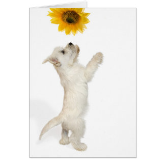 Westie Pup And Sunflower Card
