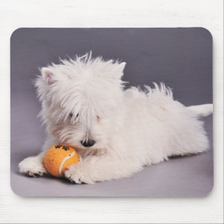 westie puppy mouse pad