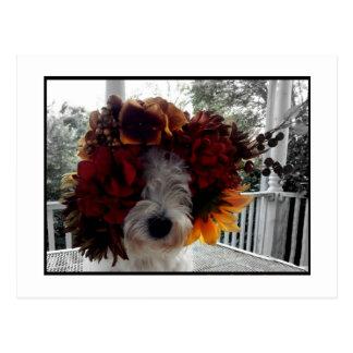 Westie Retro Autumn Flowers Postcard