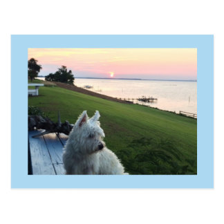 Westie River Sunset Postcard