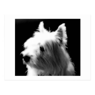 Westie Soft Profile Postcard