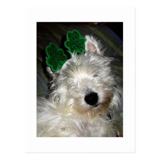 Westie St. Patrick' Day Shamrocks Postcard