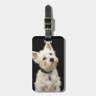 Westie (West Highland terrier) with collar Luggage Tag