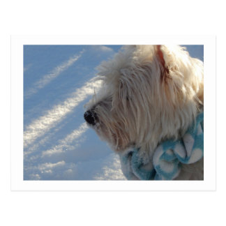Westie Winter Snow Profile Postcard