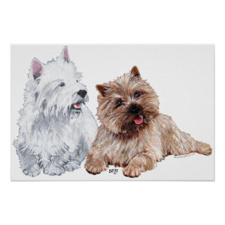Westie with a Brown Cairn Terrier Poster