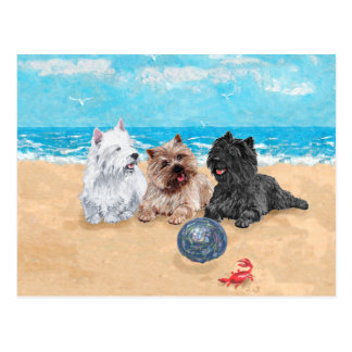 Westie with Cairn Terriers at the Beach Postcard