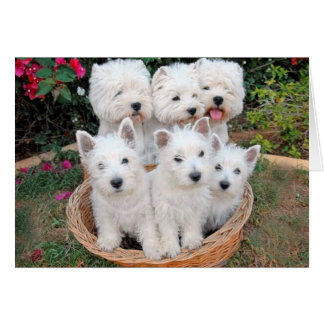 Westies in a Basket Card