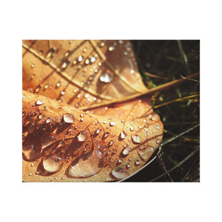 Wet Autumn Leaf - Canvas Gallery Wrapped Canvas