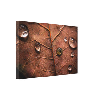 Wet autumn leaf gallery wrapped canvas