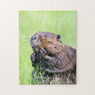 Wet Beaver Jigsaw Puzzle