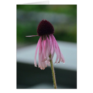 Wet cone flower card
