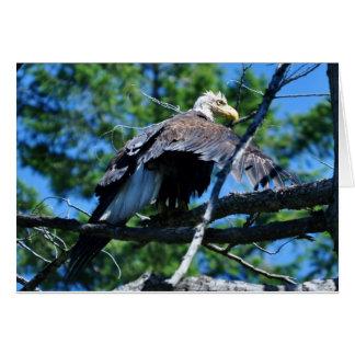 Wet Eagle Card