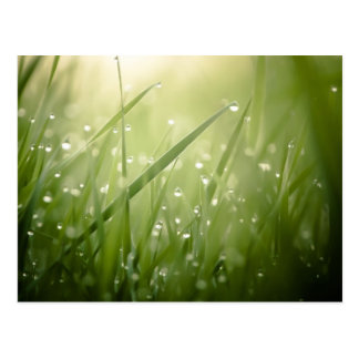 wet grass postcard
