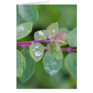 wet leaf in the garden card