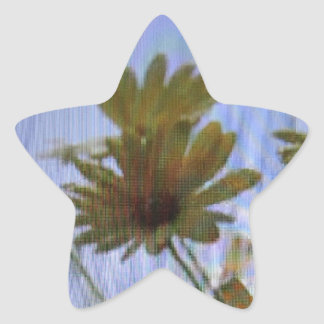Wet marguerites. star sticker