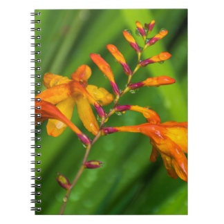 Wet orange flower notebook