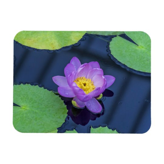 Wet purple waterlily fridge magnet
