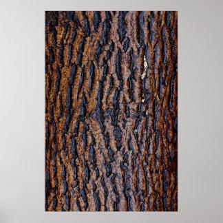 Wet tree bark posters
