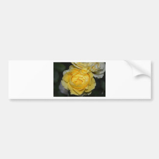 Wet Yellow Rose Bumper Sticker