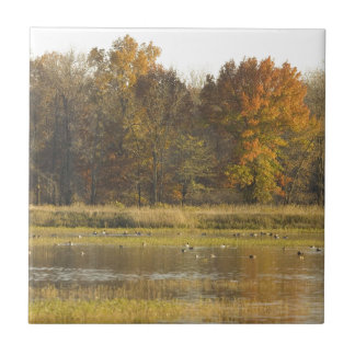 WETLAND WITH AUTUMN TREES IN BACKGROUND AND DUCKS SMALL SQUARE TILE