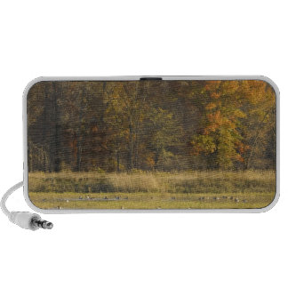 WETLAND WITH AUTUMN TREES IN BACKGROUND AND DUCKS iPhone SPEAKER