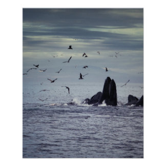 Whale 11.5 Cm X 14 Cm Flyer