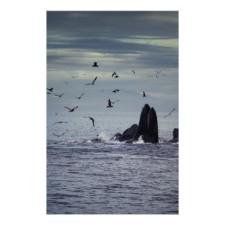 Whale 14 Cm X 21.5 Cm Flyer