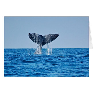 Whale Blank Note Card