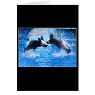 Whale Photo Greeting Card