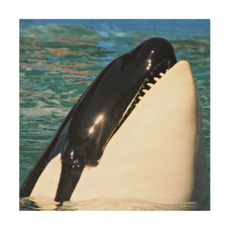 Whale Saying Hello Wood Print