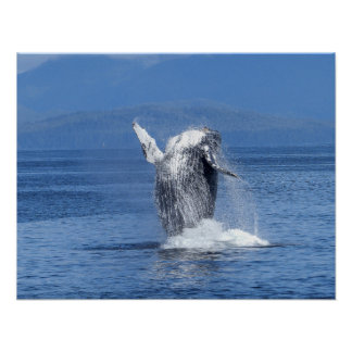 Whale Sea Water Dive Swim Fish Animal Personalize Poster