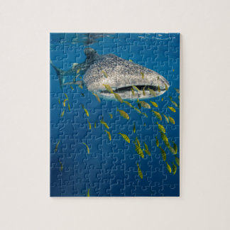 Whale Shark with fish, Indonesia Jigsaw Puzzle