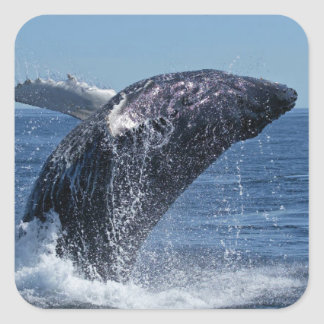 Whale Square Sticker