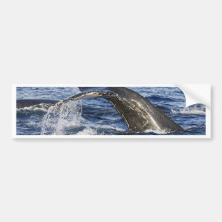 Whale Tail Bumper Sticker