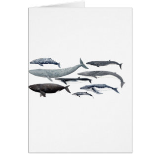 Whales and right whales card