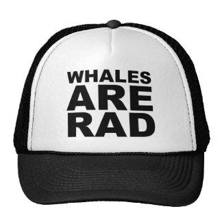 WHALES ARE RAD Shirt Hat Mug Mousepad