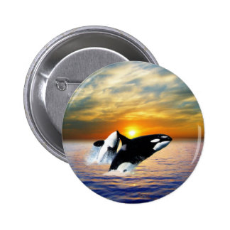 Whales at sunset 6 cm round badge