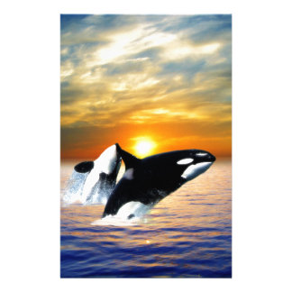 Whales at sunset stationery