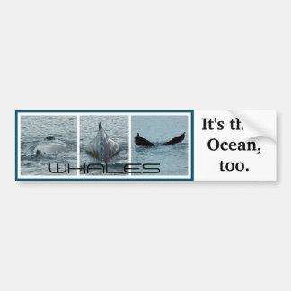 Whales, It's Their Ocean Too Bumper Sticker