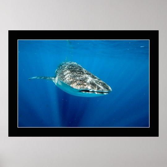 Whaleshark #1 poster