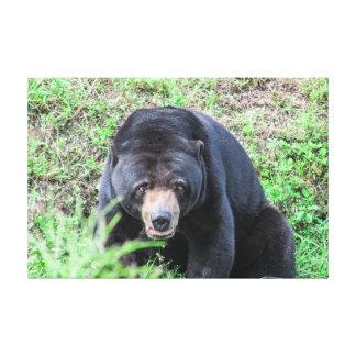 What a Bear! Canvas Print