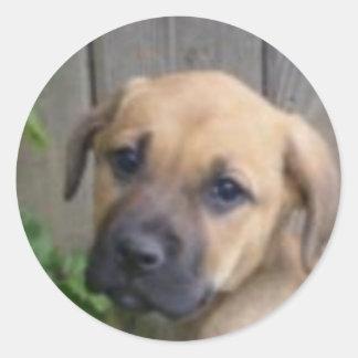 """""""What a cutie""""! puppy sticker Round Sticker"""