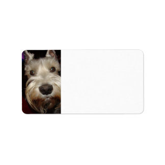 What are you looking at? address label