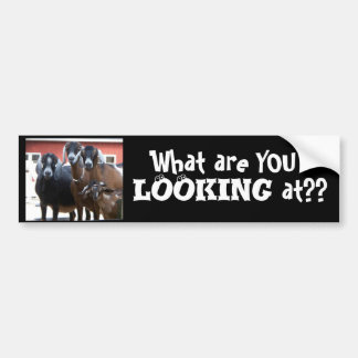 """""""What are YOU Looking at??"""" Bumper Sticker"""