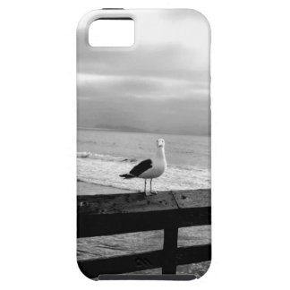 What are you looking at? iPhone 5 case